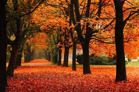 fall colors colorado fall colors