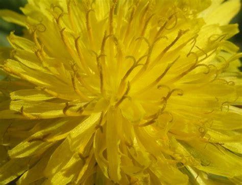 fotografie fiori fiore giallo fotografia fiori