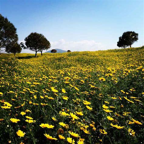 il giardino delle ninfe il giardino delle ninfe apicoltori sardi
