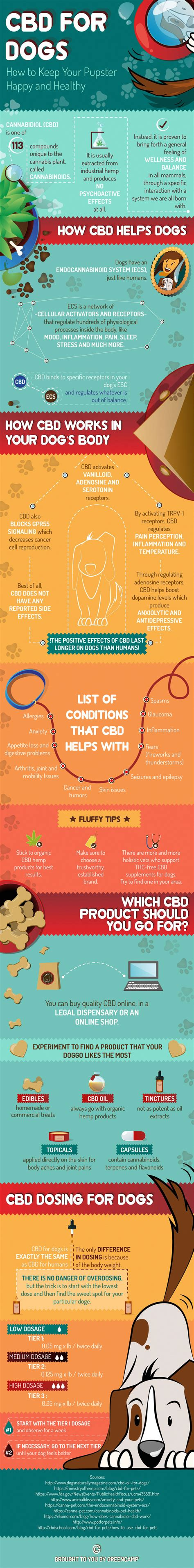 cbd for dogs all you need to about cbd for dogs