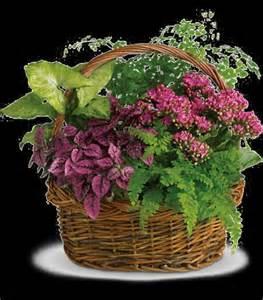 t96 2a secret garden basket cainsbridalwreath
