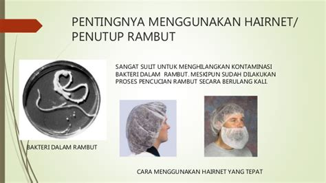 Hairnets Rambut konsultan haccp iso 22000 amarylliap gmail 08129369926