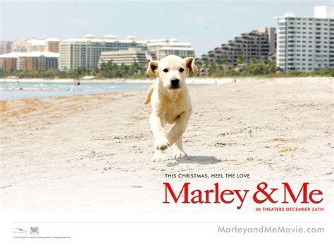 marley and me marley and me images marley me hd wallpaper and background photos 13563668