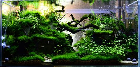 Tank Aquascape by 1000 Images About Aquascaping Planted Tanks Aquariums