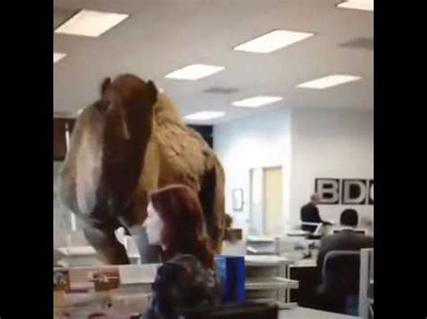geico hump day camel commercial happier than a youtube geico hump day remix guess what day it is camel final
