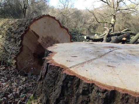 oak tree woodworking oak wood tree trees wood