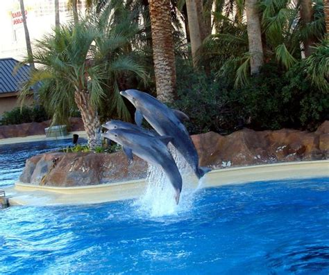 Secret Garden And Dolphin Habitat by Secret Garden Picture Of Siegfried Roy S Secret Garden