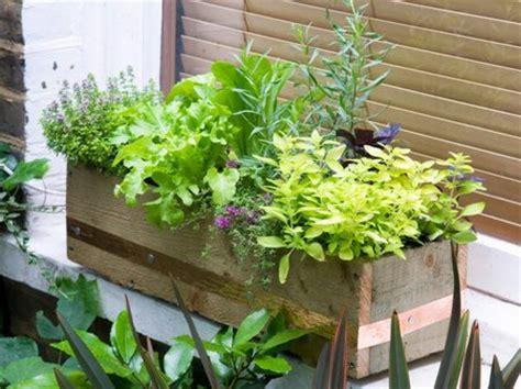 Window Vegetable Garden Vegetables Garden In Window Boxes Www Coolgarden Me