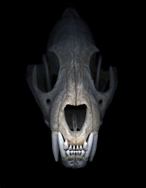 Greg Elms Cheetah Skull Art Blart Skull On