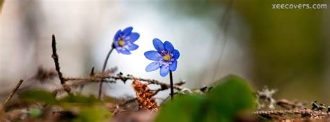 blue flowers fb cover photo xee fb covers
