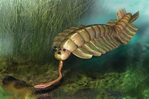 Protection For Weirdest Species by 10 Prehistoric Creatures That Can Spook You