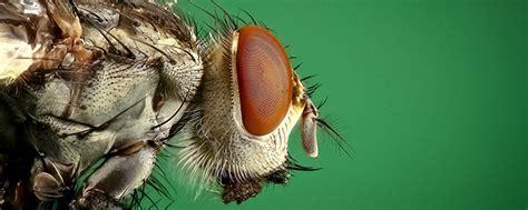 Fliegen Auf Der Terrasse Vertreiben by So Vertreiben Sie Fliegen M 252 Cken Wespen Und Andere
