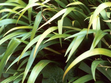 foliage plants foliage plants