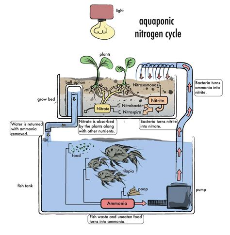 aquaponic systems plans the variety of fish for