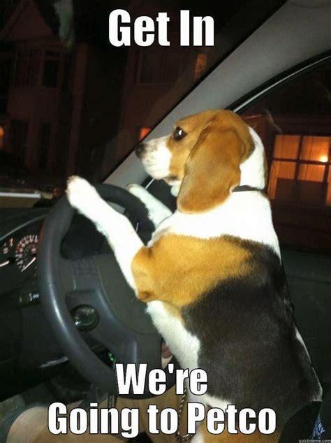 Beagle Meme - 817 best beagles images on pinterest doggies beagle