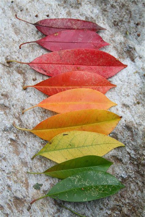 leaf colors joyfully picked falls leaf rainbow