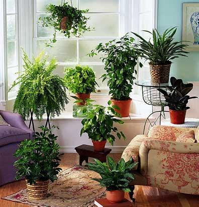 plants that don t need natural light pin by don penn on old dog tricks pinterest