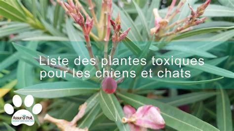 Liste Des Plantes Toxiques Pour Les Poules by Liste Des Plantes Toxiques Pour Les Chiens Et Les Chats