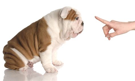 how to a new puppy how to a puppy in 3 simple steps top tips