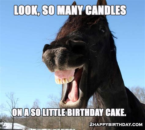 horse wishing birthday happy birthday memes pinterest