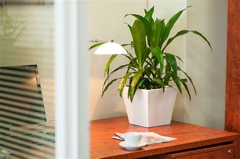 desk plant desk plants osborne plant service