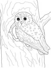 color owl owl coloring pages