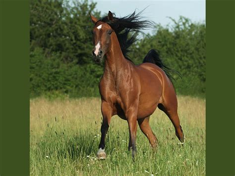 caballos cuarto de milla venta mercadolibre argentina milla my 600 pound life newhairstylesformen2014 com