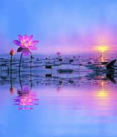 Lotus Lake Lotus Lake Pictures Photos And Images For