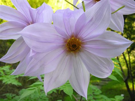 giardini invernali fioriture invernali giardini botanici hanbury