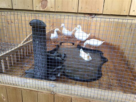 Backyard Chicken Coop Plans Free Cool Coops The Duck Fort Community Chickens