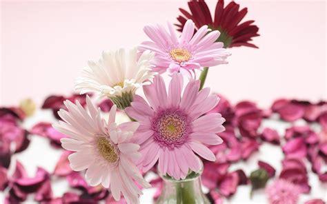 witte achtergrond met 3d pingun met zonnebril en een ijsje hd bloemen wallpapers mooie leuke achtergronden voor je