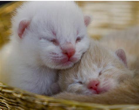 newborn kittens 301 moved permanently