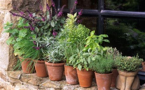 herb pots outdoor from coriander to mint a guide to growing herbs the