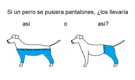 preguntas dificiles existenciales como poner pantalones a un perro bored panda