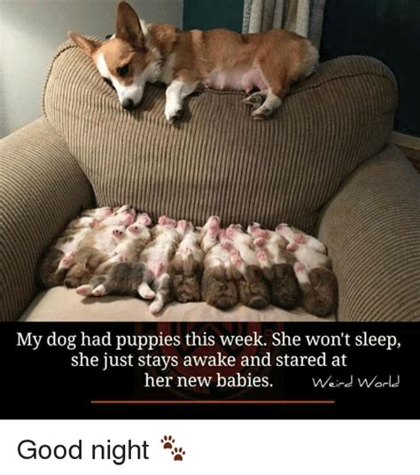 puppy won t sleep 25 best memes about new baby new baby memes