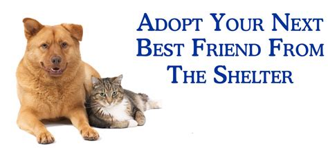 To Adopt by Adopt Your Next Best Friend Against Animal Cruelty