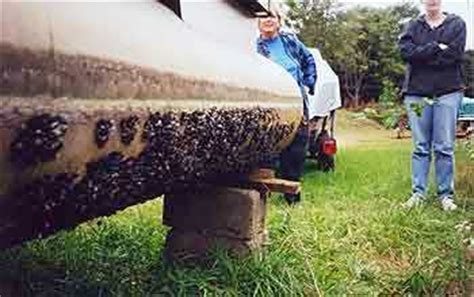 how to remove zebra mussels from a boat how to prepare your boat for a safe transport boat