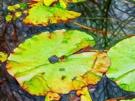 dried lotus leaves dried lotus leaves in pond painting by lanjee chee