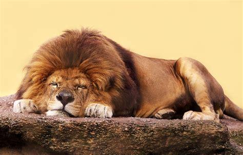 imagenes animales durmiendo 191 c 243 mo duermen los animales beevoz