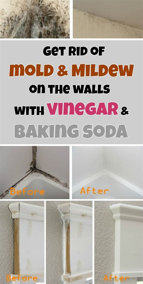 how to get rid of mold on walls in bathroom get rid of mold mildew on the walls with vinegar and
