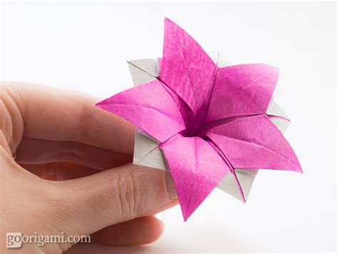 Origami Of A Flower - origami flower ipomeia rubra origami flower ipomeia
