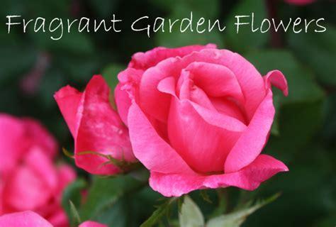 fragrant garden flowers the most fragrant flowers