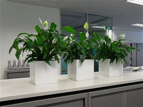 best plants for the office the best indoor plants for the office australian women