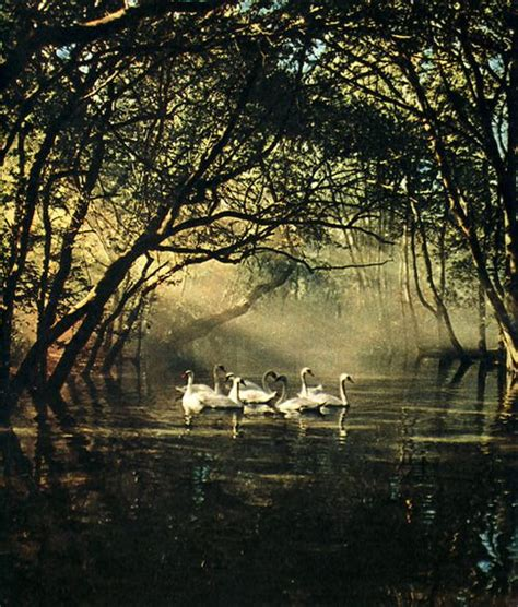 swan paddle boats the woodlands swans unkle bob quot i wanted to tell you i d changed i