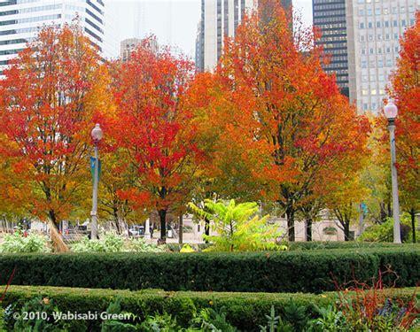 chicago trees wabisabi green