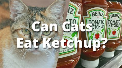 can dogs eat ketchup can cats eat ketchup pet consider