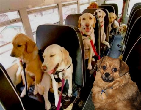 school for dogs the s
