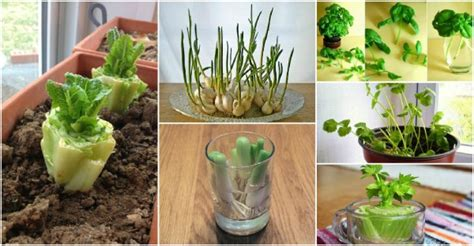 8 vegetables you can regrow how to grow apple trees from seed