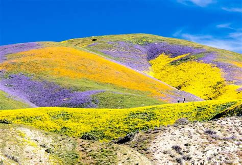 colors of spring photos california bursts with spring colors nbc
