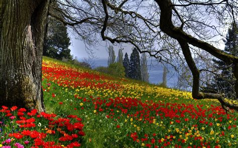 beautiful forest beautiful flowers forest nature